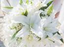 Svatební květina, Zakynthos